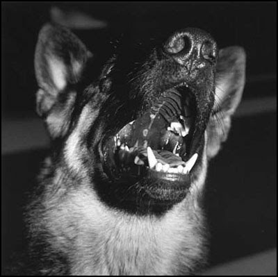 Police Dog - Erica Langley
