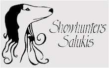 Showhunters Salukis