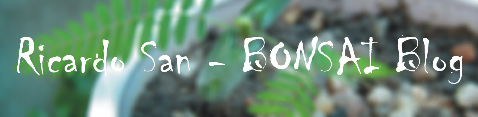 Ricardo San - BONSAI Blog