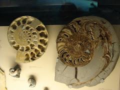 Nautilus. Armonía de la naturaleza.
