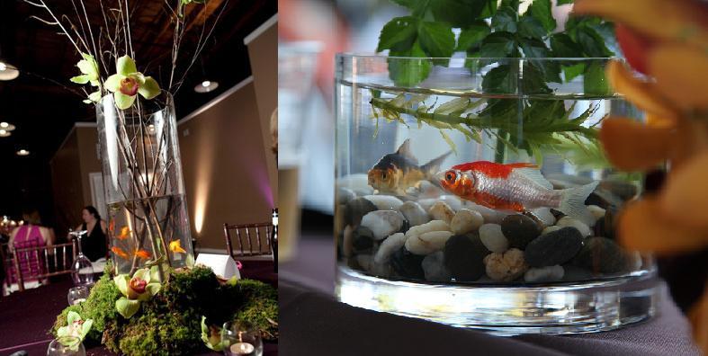 Peces en tu boda foro manualidades para bodas for Peceras con peces