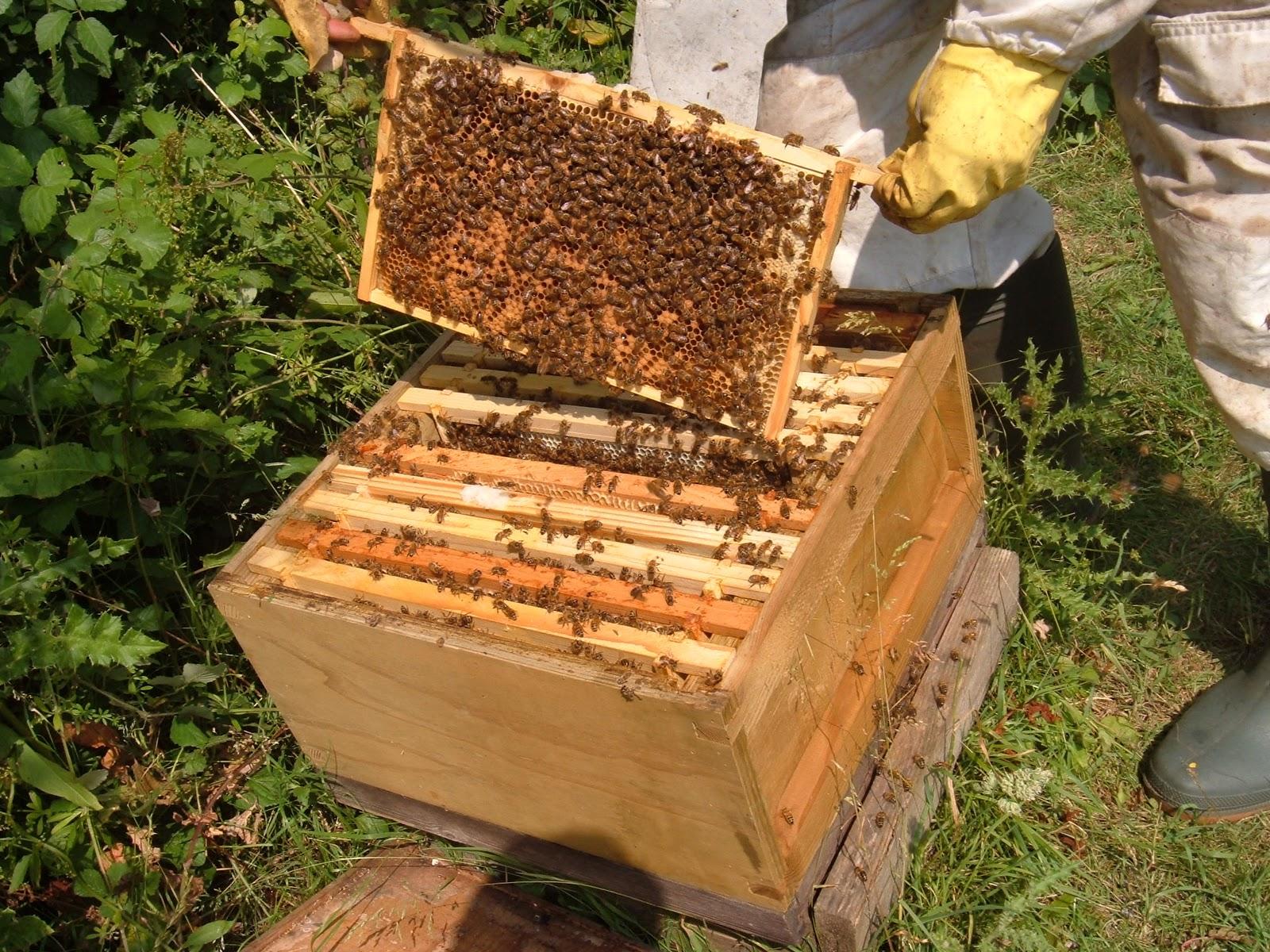 руководство для начинающего пчеловодов видео уроки