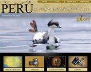 PERÚ. el verdadero paraíso de aves