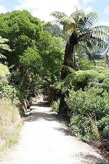 Walking down towards Cathedral Cove