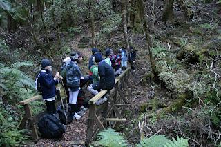 Bush walk in NZ