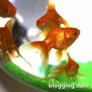 Blogging Dani