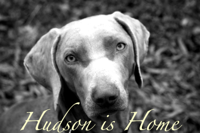 Hudson is Home