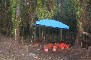 crime scene where Caylee Anthony's remains were found almost 6 months after she went missing