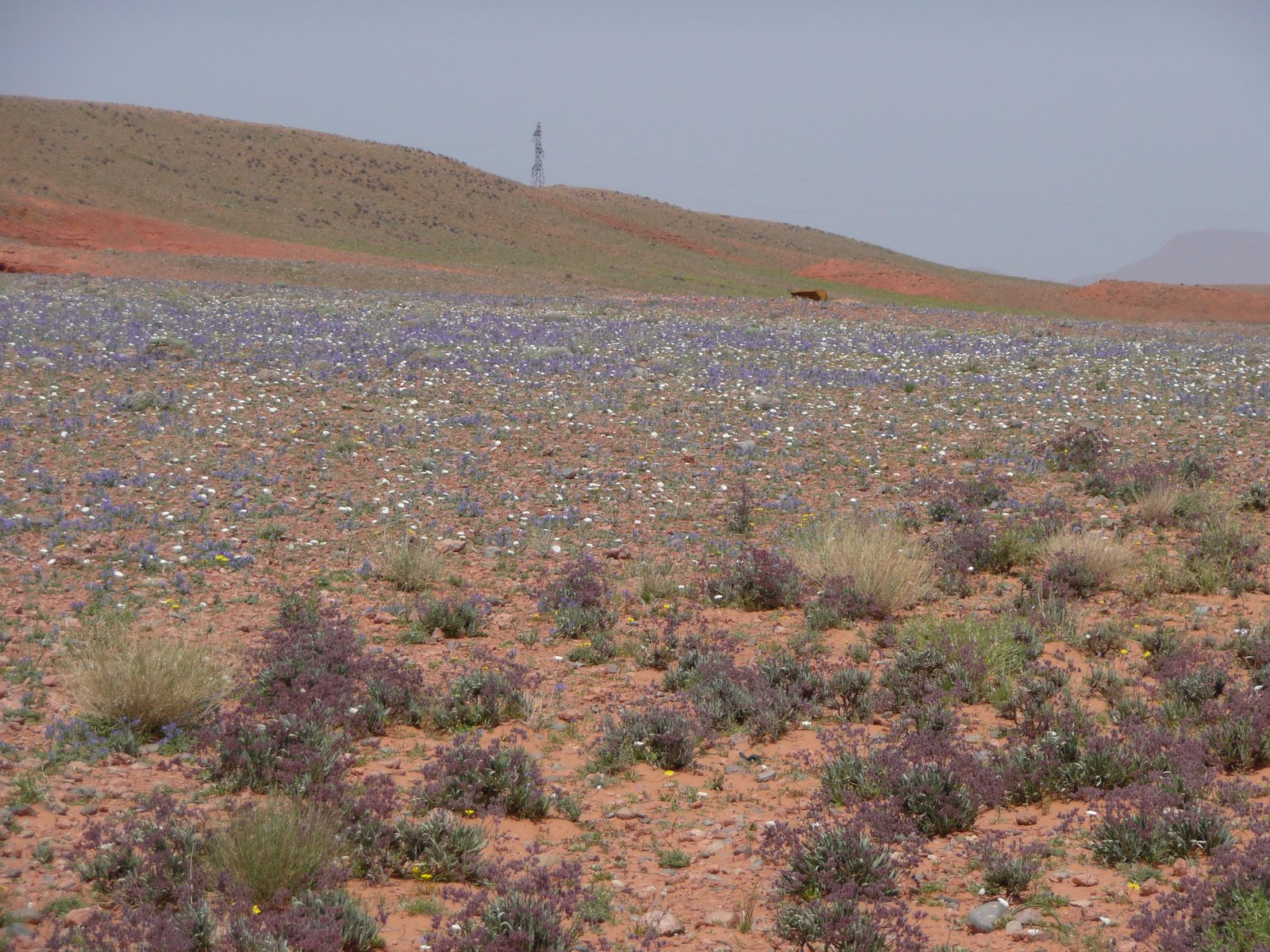 [Tuareg+Rally+2009+(409).JPG]