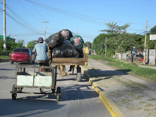 recycling by horse cart, La Ceiba, Honduras