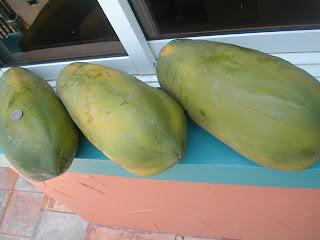 Papayas, La Ceiba, Honduras