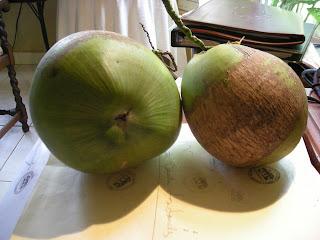 Coconuts, La Ceiba, Honduras