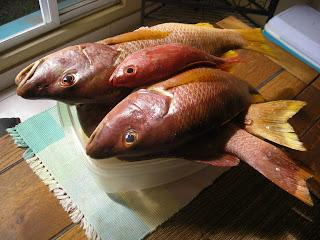 fresh fish, La Ceiba, Honduras