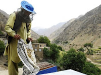 A beekeeper in the Dara district of Afghanistan's Panjshir province tends to one of his hives.