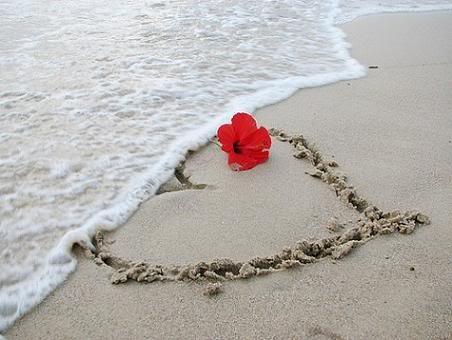 Love Heart Picture on Love Heart Love Love Hearts Animals Herzen Target Blank Romantic Sweet