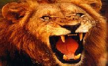 ..:: Macrocélula Leão de Judá ::..