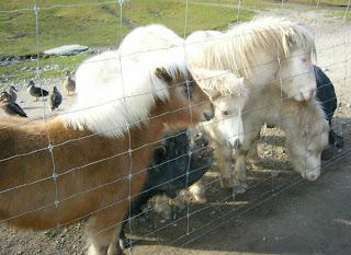 My New Zealand Vacation, Queenstown, Deer Park, Photo20593