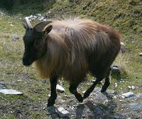 My New Zealand Vacation, Queenstown, Deer Park, Photo20662