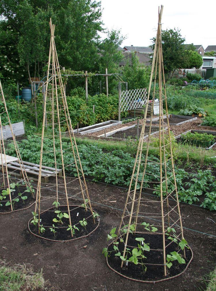 Lillbutton 39 s farm bean teepees for Plante a planter