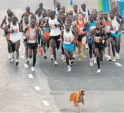 dog-running-in-front-of-marathon-runners
