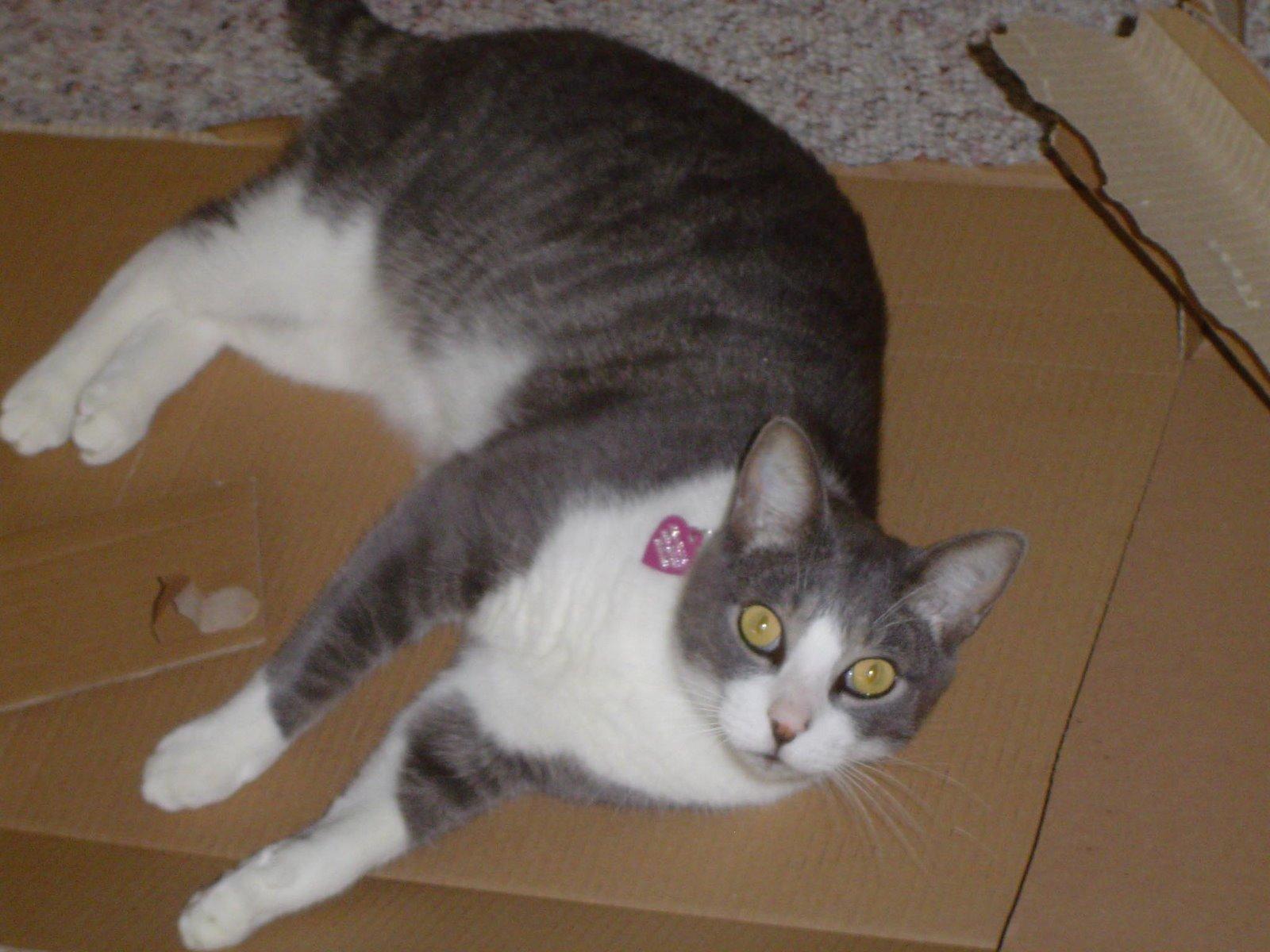 [Prancer+and+Ikea+Box3-091804.jpg]