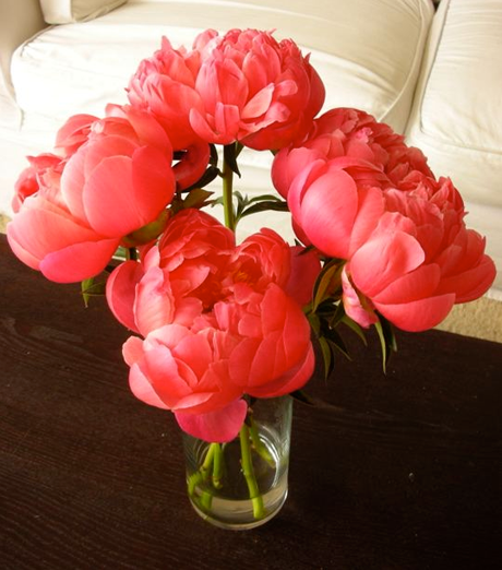Peonies Season Interesting Of Coral Peonies Flower Images