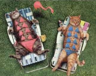 gatas de biquini xaninhas tomando sol