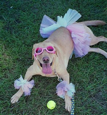Foto de Cachorro vestido de bailarina