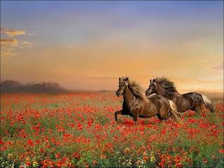 cavalo selvangens