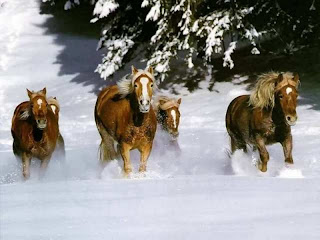 cavalos paisagem  na neve