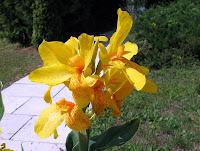 Bonita flor da Bananeirinha de Jardim