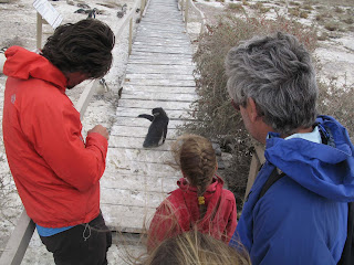 Expedicion en Kayak Parque Nacional Marino Patagonia Austral. Sea Kayak Expedition. Marine National Park Patagonia Austral. Zona de Cabo Dos Bahias
