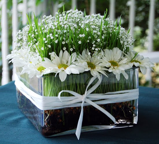 The wheatgrass grower daisy centerpiece how to grow