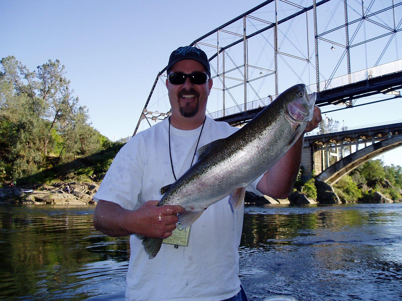 Steelheadfan monster rainbow trout steelhead salmon for Lake natoma fishing