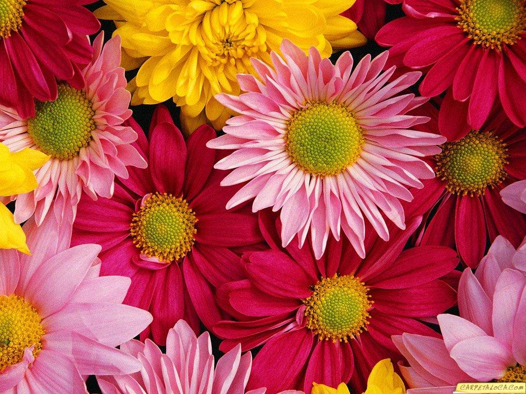 position absolute left 0px top 30px div fondo de flores