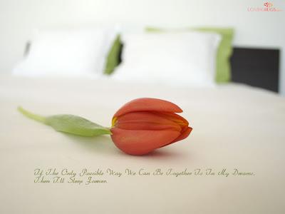 white rose wallpaper. Beautiful Rose Wallpaper