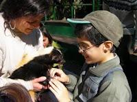 Fotografia de um menino surdocego a fazer festas a um animal, na visita ao Zoo