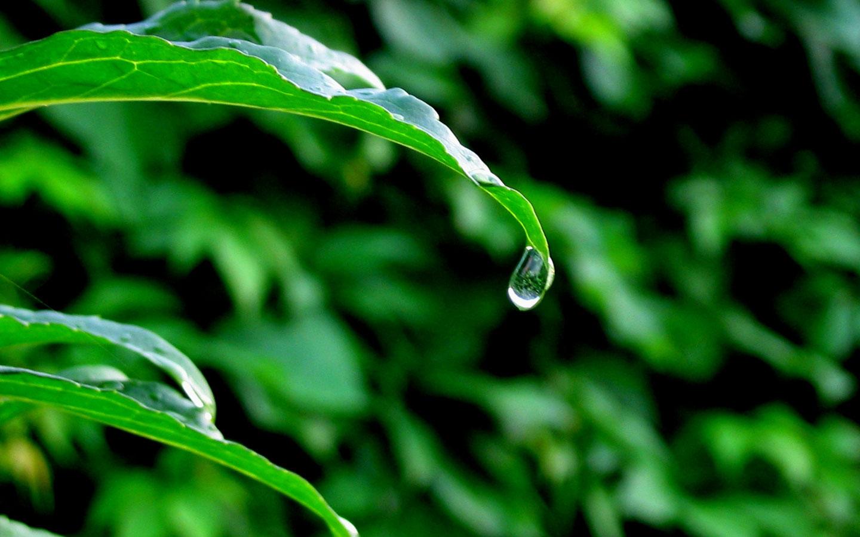 http://2.bp.blogspot.com/_7Xgfr0PDVM4/TPNKRLjsEII/AAAAAAAABEU/0YezeTdW6Gg/s1600/Leaves_in_Rain_1440x900.jpg