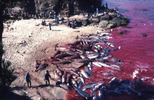 Dolphin Graveyard