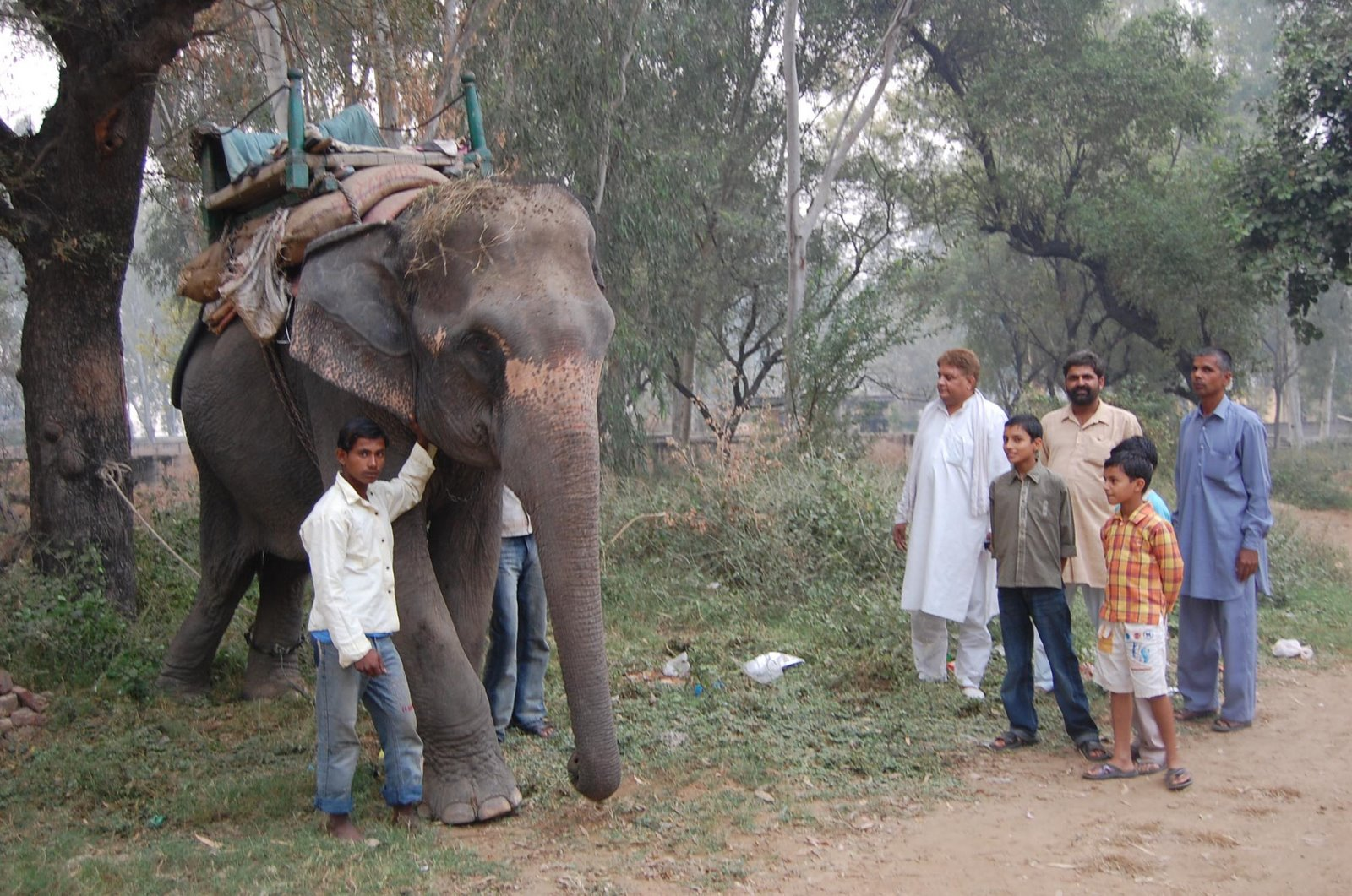 ELEPHANT RESCUED IN JHAJJAR BY NARESH KADYAN
