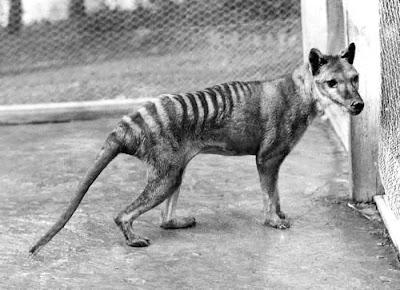 Los Animales Extintos A Lo Largo De La Historia