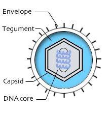 symptoms of herpes simplex virus type 2 gm power steering pump