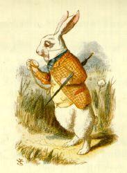 Segui il Coniglio Bianco!