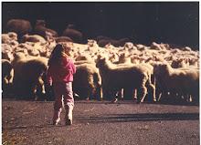 My kid Herds too!!!!