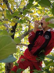 klimmen en appels plukken