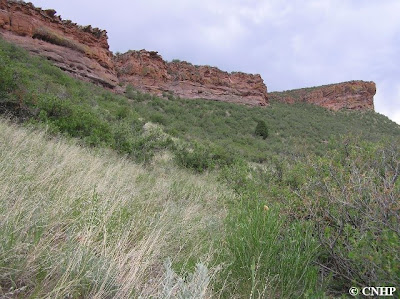 Indian Creek Hogback Potential Conservation Area