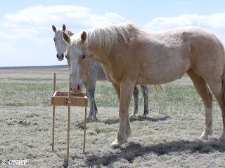 horses with point-frame