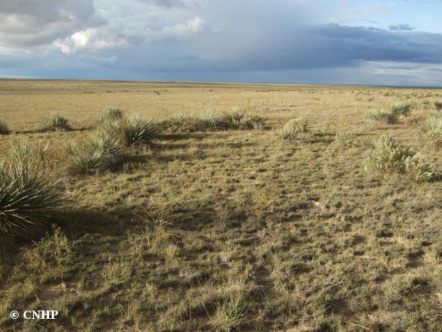 Cnhp blog ecological systems shortgrass prairie for Short grasses for landscaping