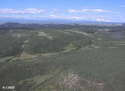 example of foothills shrubland