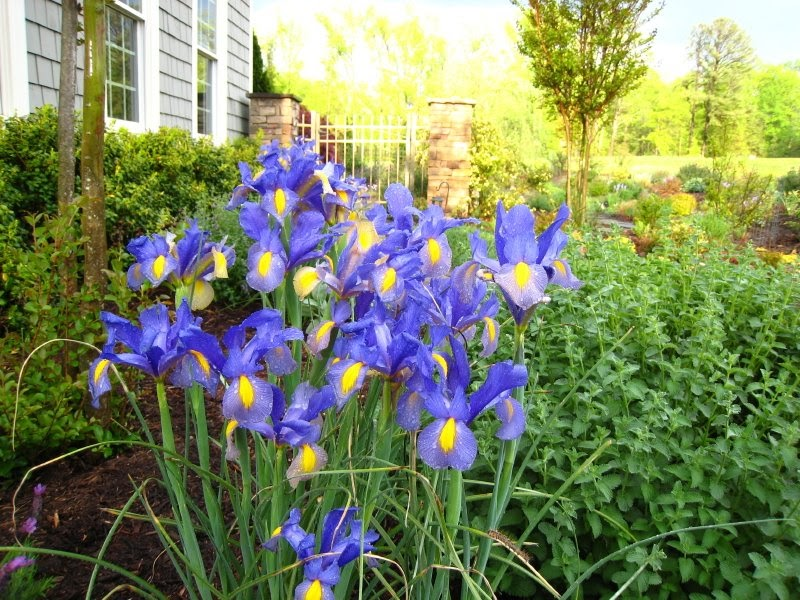 Defining Your Home Garden and Travel Favorite Flower